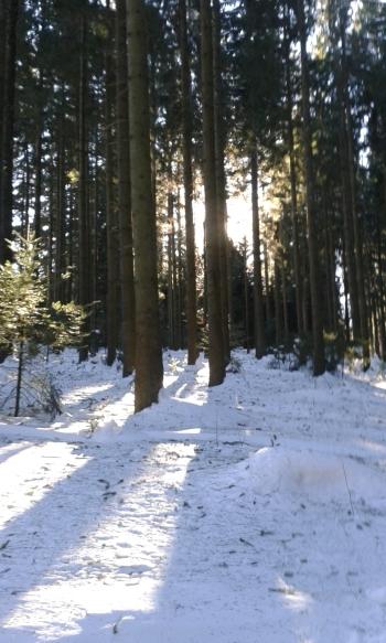 Ab durch de Wald